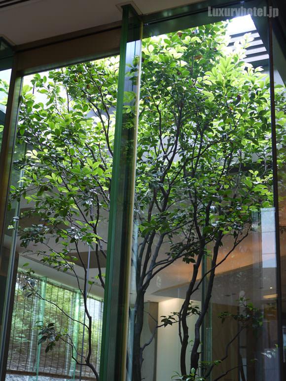 グランド ハイアット 東京 旬房 店内の木