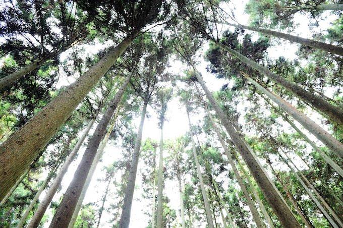 ハイアットリージェンシー 京都 吉野のヒノキ