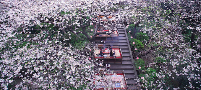鉄板焼 しゃぶしゃぶ ステーキハウス 桂/ザ・プリンス さくらタワー東京